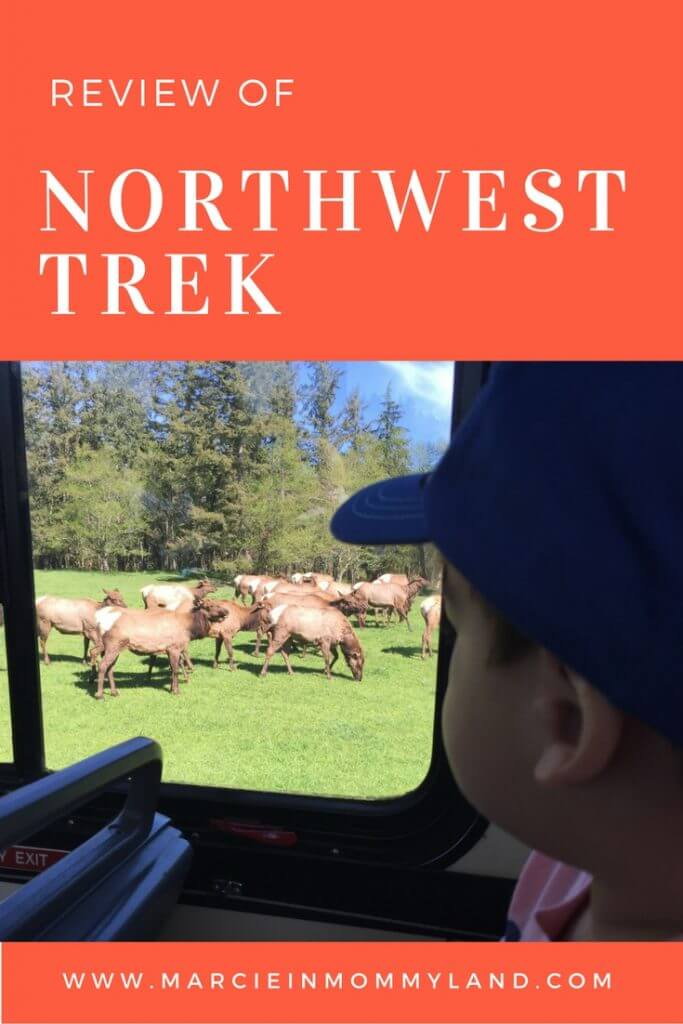 Review of Northwest Trek