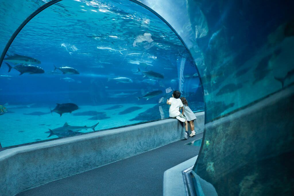 The Maui Ocean Center is a top thing to do in Maui with kids.