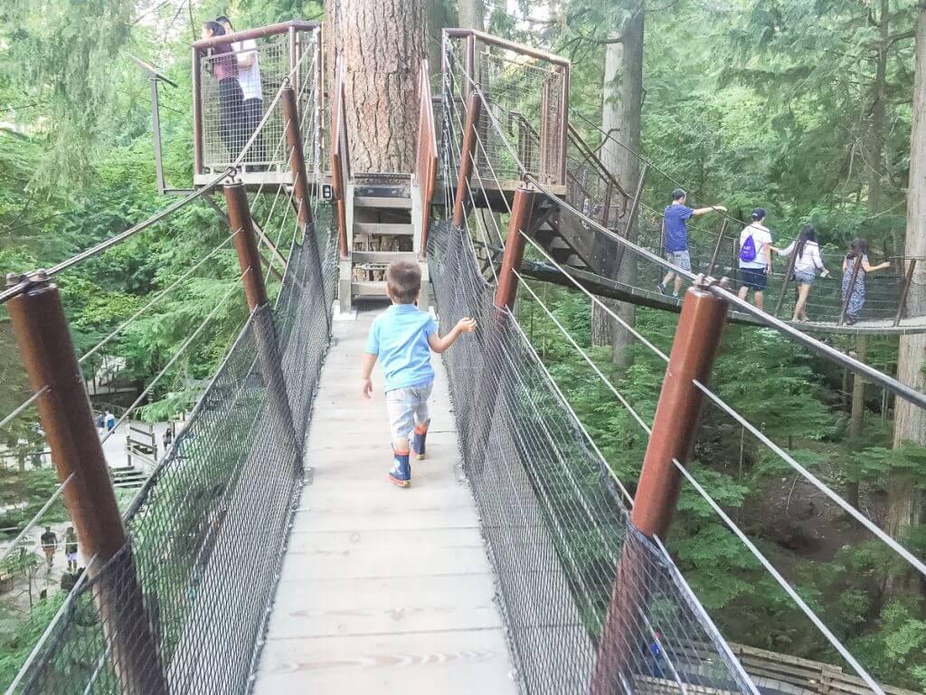 Tree Walk at Capilano Suspension Bridge Park in Vancouver, BC #capilano #capilanosuspensionbridge #capilanosuspensionbridgepark #vancouver #northvancouver #bc #britishcolumbia #canada #pnw
