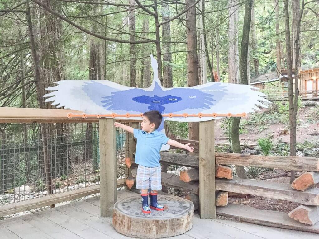 Measuring wingspan at Capilano Suspension Bridge Park in North Vancouver, BC #capilano #capilanosuspensionbridgepark #capilanosuspensionbridge #vancouver #vancouverattraction #pnw #canada #bc #britishcolumbia