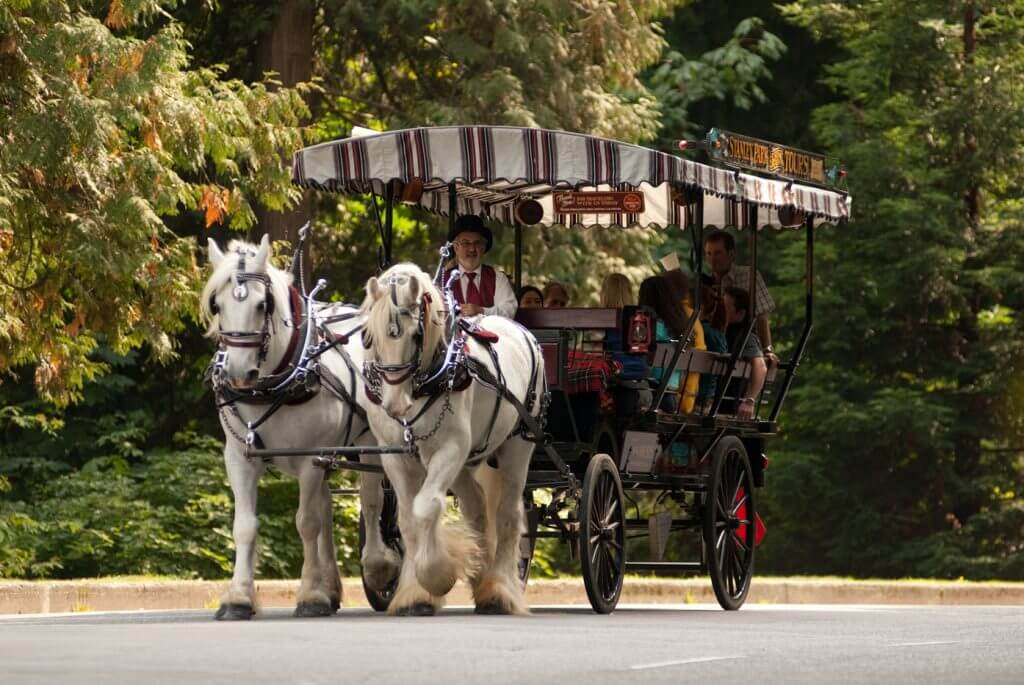 Photo of Stanley Park Horse Drawn tour in Vancouver, British Columbia in Canada, which is a things to do in Vancouver with Kids #stanleypark #horsedrawntour #carriage #vancouver #bc #britishcolumbia #pnw #vancouverbc