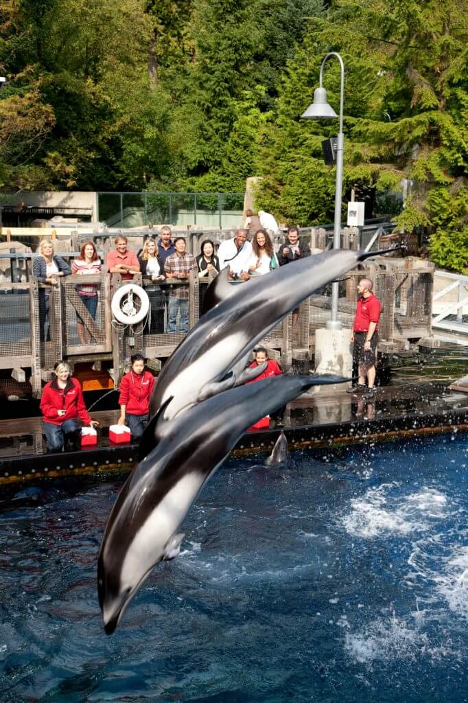 Photo of Vancouver Aquarium at Stanley Park in Vancouver, British Columbia in Canada is a things to do in Vancouver BC with kids #vancouveraquarium #stanleypark #vancouver #vancouverbc #explorebc #pnw #canada