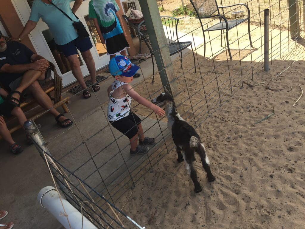 Surfing Goat Dairy