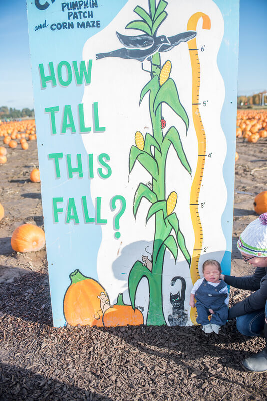 Take advantage of pumpkin patch photoshoot props like this sign