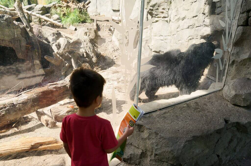 Sloth Bear at Woodland Park Zoo