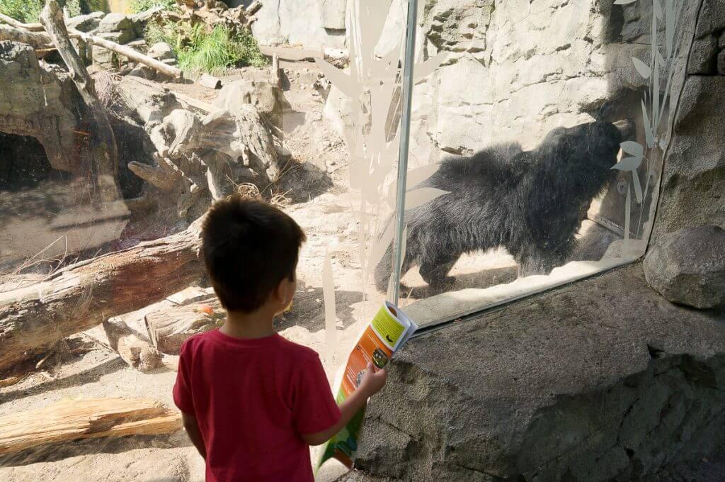 Sloth Bear at Woodland Park Zoo
