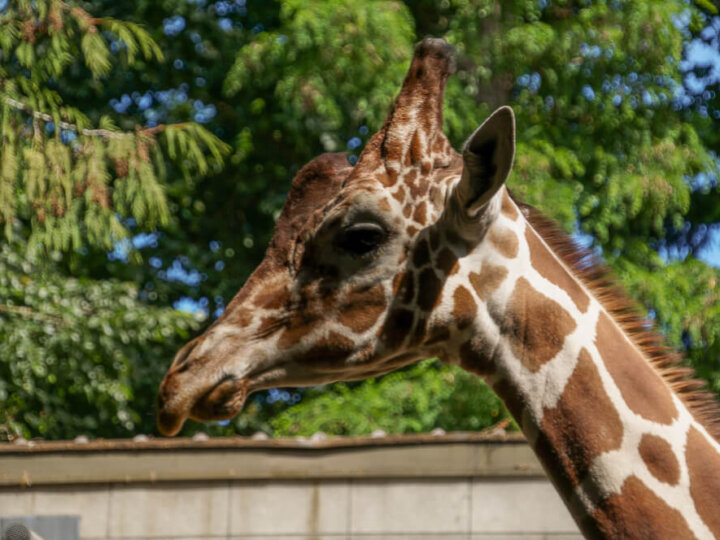 Local Mom's Guide to Seattle's Woodland Park Zoo