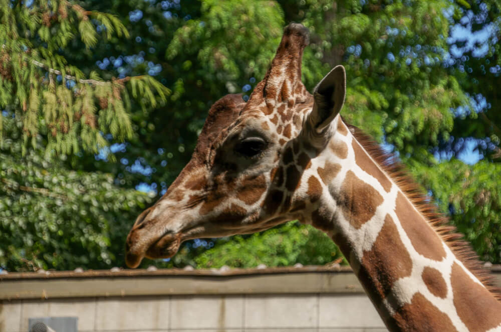 Local Moms Guide to Woodland Park Zoo in Seattle