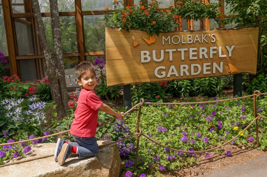 Molbak's Butterfly Garden at Woodland Park Zoo