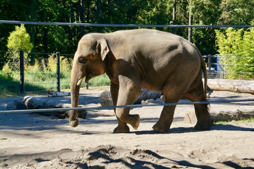 Elephants at Oregon Zoo in Portland, OR