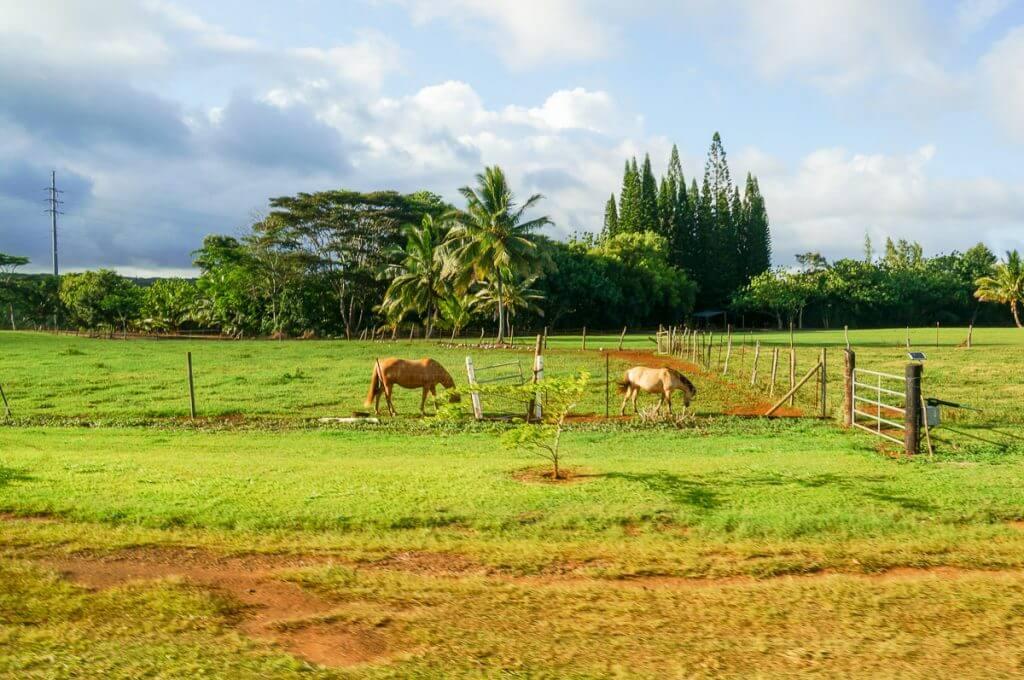For things to do in Kauai, Kilohana Plantation Railway and Luau Kalamaku are fun things to do on Kauai