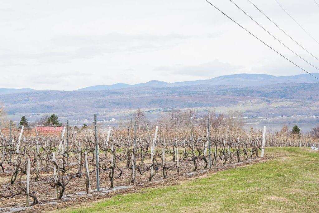 Photo of the vineyard near Quebec City with a stunning view of the St. Lawrence River and the Laurentian Forest #stlawrenceriver #laurentianforest #quebecregion #canada #vineyard