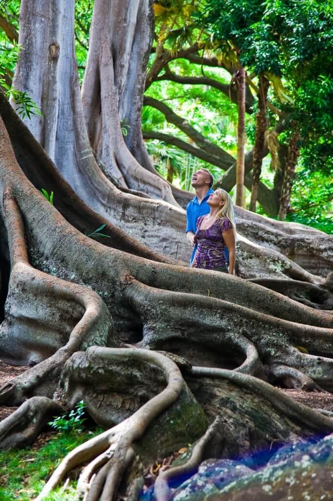 Photo of a couple at the National Tropical Botanical Garden on Kauai, Hawaii, which is a top kid-friendly activity on Kauai for families #kauai #nationaltropicalbotanicalgarden #figtree #hawaii #garden