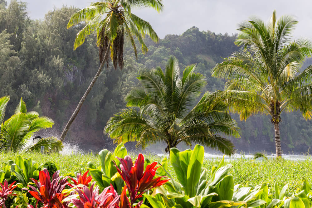 Complete Guide to Maui with Kids (Resorts, Beaches