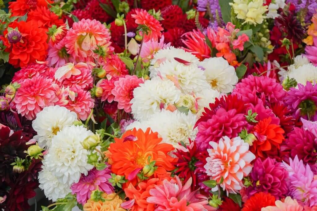 Photo of flowers at the Kent Farmers Market in downtown Kent, WA #visitkentwa #kentfarmersmarket #flowers