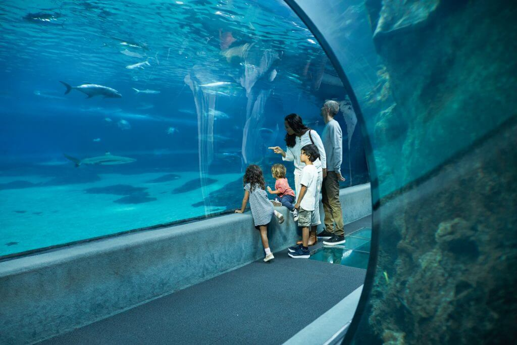 A Complete Travel Guide to Maui with Kids featured by top Hawaii travel blog, Hawaii Travel with Kids: Photo of the Maui Ocean Center, a top attraction for families on Maui #familytravel #maui #mauioceancenter #mauiwithkids #travelwithkids