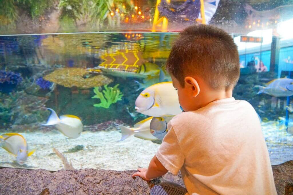 Photo of a toddler at SEA LIFE California Aquarium at LEGOLAND California, something fun at LEGOLAND for 2 year olds #LEGOLANDCA #SEALIFECaliforniaAquarium #aquarium