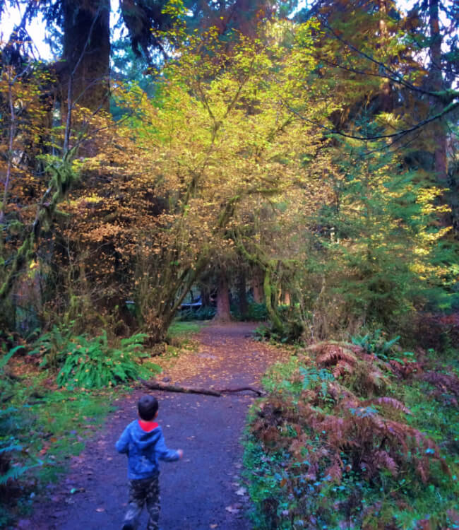 Photo of a boy running at Hoh Rainforest in the Olympic National Park in Washington State #pnw #pacificnorthwest #hohrainforest #olympicnationalpark