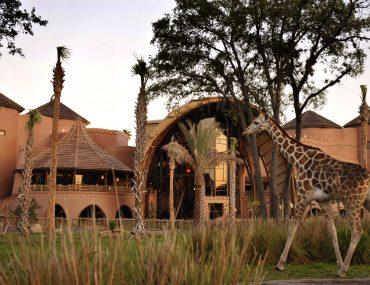 Kidani Village at Disney's Animal Kingdom Lodge at Walt Disney World in Orlando, Florida #kidanivillage #waltdisneyworld #disneyworld #animalkingdom