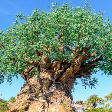 Planning Your Day at Disney's Animal Kingdom Park with Kids