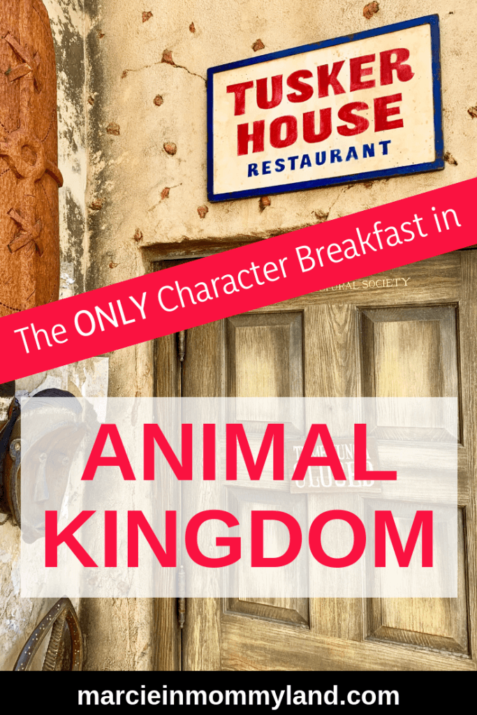 Are you looking for a Disney Character Breakfast at Animal Kingdom in Walt Disney World? Tusker House is the ONLY character dining experience in Animal Kingdom and characters are available at breakfast, lunch, and dinner. Your kids will love seeing Safari Donald, Daisy, Goofy and Pluto as they enjoy this buffet-style meal. Click to read more or pin to save for later. www.marcieinmommyland.com #waltdisneyworld #disneyworld #tuskerhouse #animalkingdom #characterdining