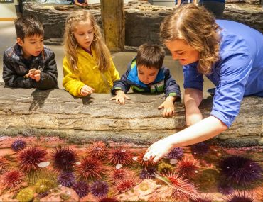 Play Date at the Seattle Aquarium Behind the Scenes tour, where kids got to feed sea urchins! #seattleaquarium #seattlewa #seattlewashington #seattlewithkids #familytravel | An Exclusive Seattle Aquarium Behind the Scenes Tour featured by top Seattle blogger, Marcie in Mommyland