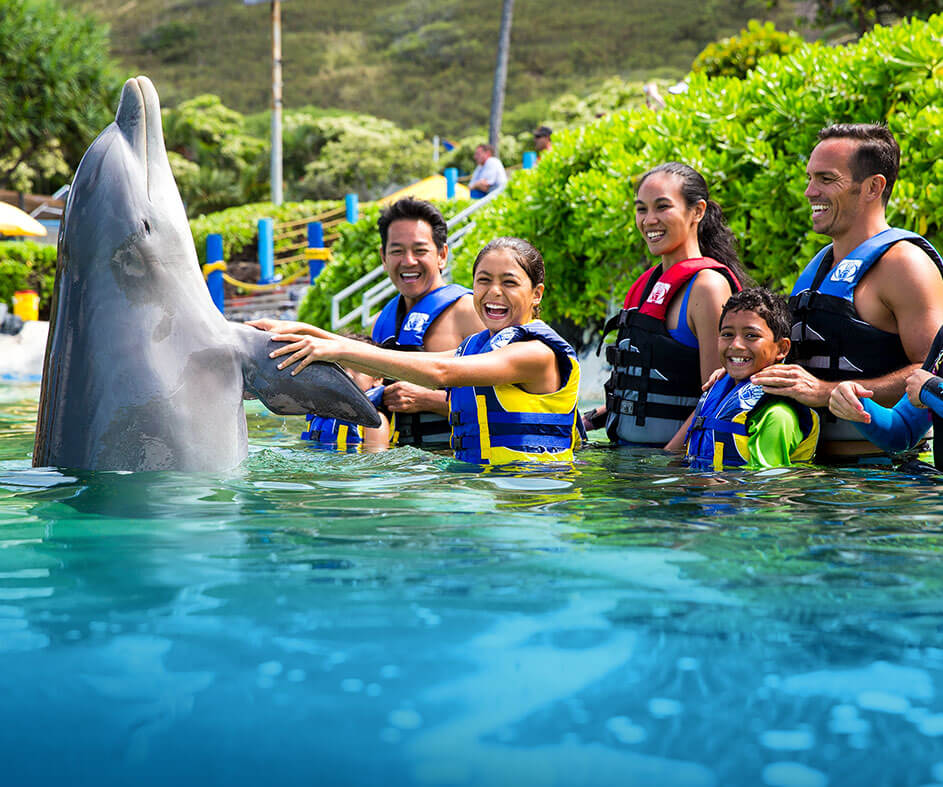 Families can swim with dolphins on Oahu with this kid-friendly Oahu activity.