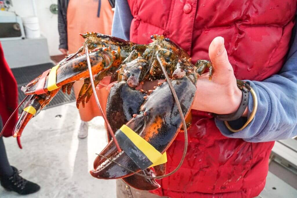 Check out this lobster from a Portland Maine cruise around Casco Bay in New England.