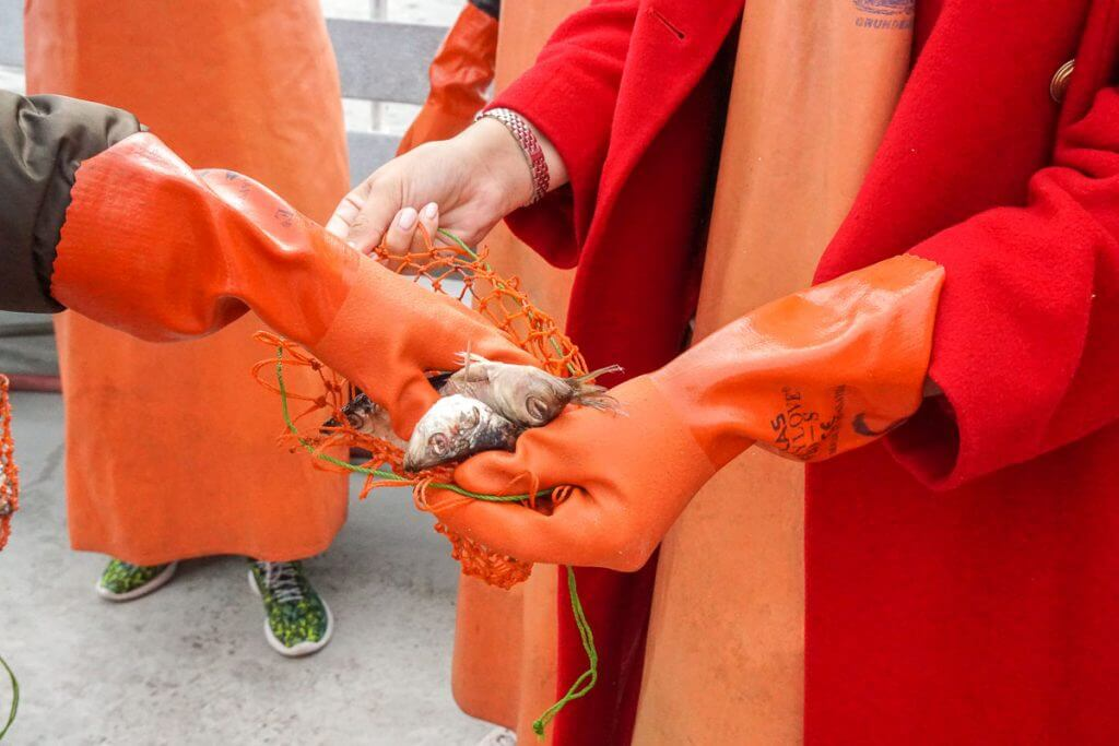 Guests can participate in this lobster cruise by filling net bags with herring fish to put in the lobster traps as bait.