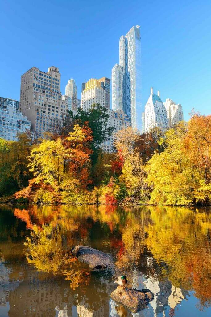 Central Park is one of the best places to see fall foliage in NYC