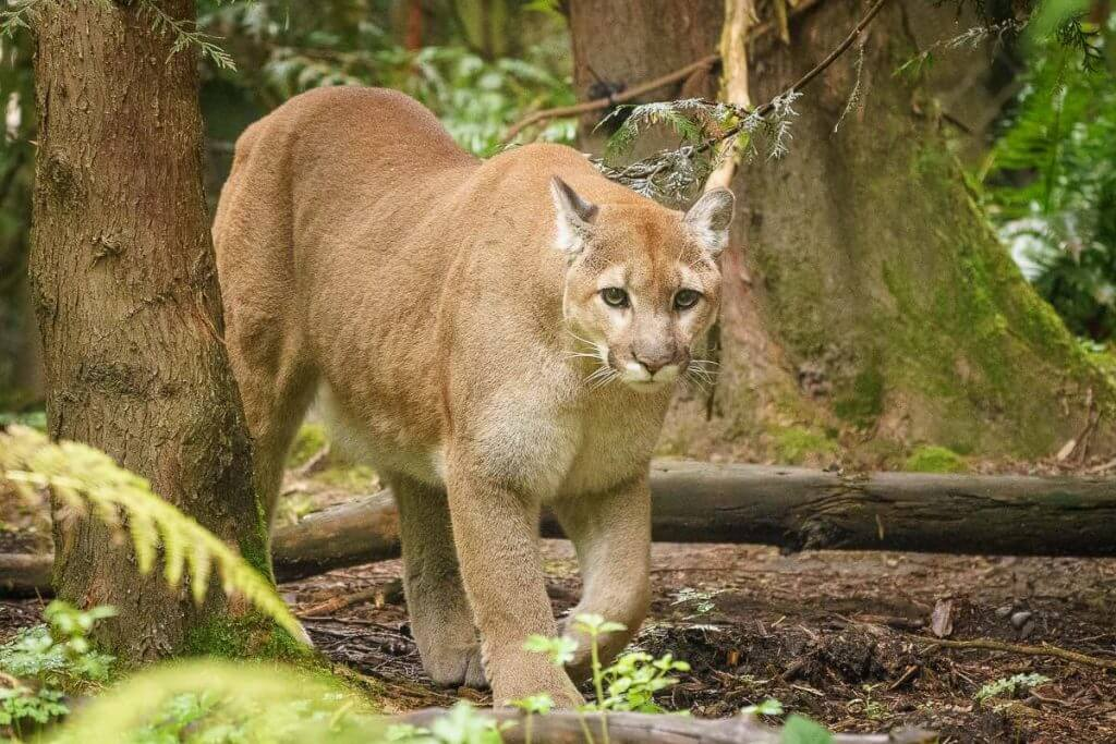 For a fun thing to do near Mount Rainier, head to Northwest Trek where you can find all kinds of animals.