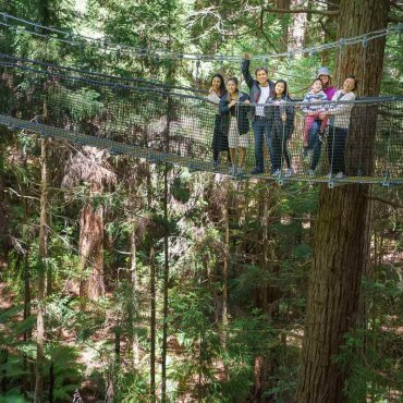 Redwoods Tree Walk in Rotorua, New Zealand: a Complete Guide