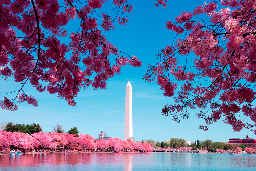 7 Inexpensive Places to Go for Spring Break in the US featured by top US travel blogger, Marcie in Mommyland: Cherry Blossoms at Washington, D.C. during Spring Break