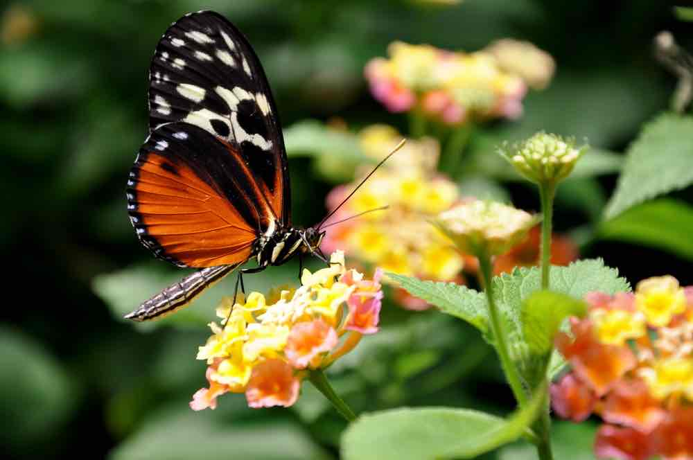 Victoria with Kids: 13 Kids Activities to Do when Visiting Victoria Canada featured by top family travel blogger, Marcie in Mommyland: Victoria Butterfly Garden in British Columbia
