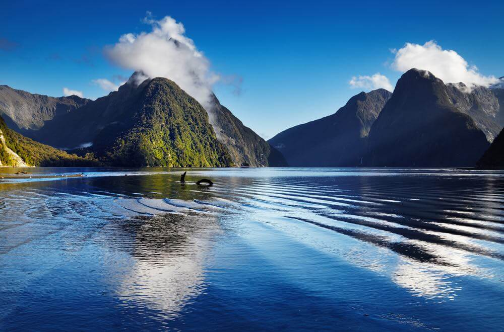 Top 12 Things to do in Queenstown with Kids featured by top family travel blogger, Marcie in Mommyland: Fiord Milford Sound, South Island, New Zealand