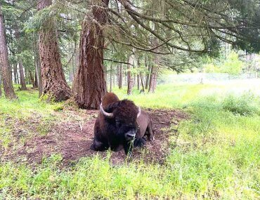 Northwest Trek Wildlife Park's Wild Drive Review featured by top Seattle blogger, Marcie in Mommyland