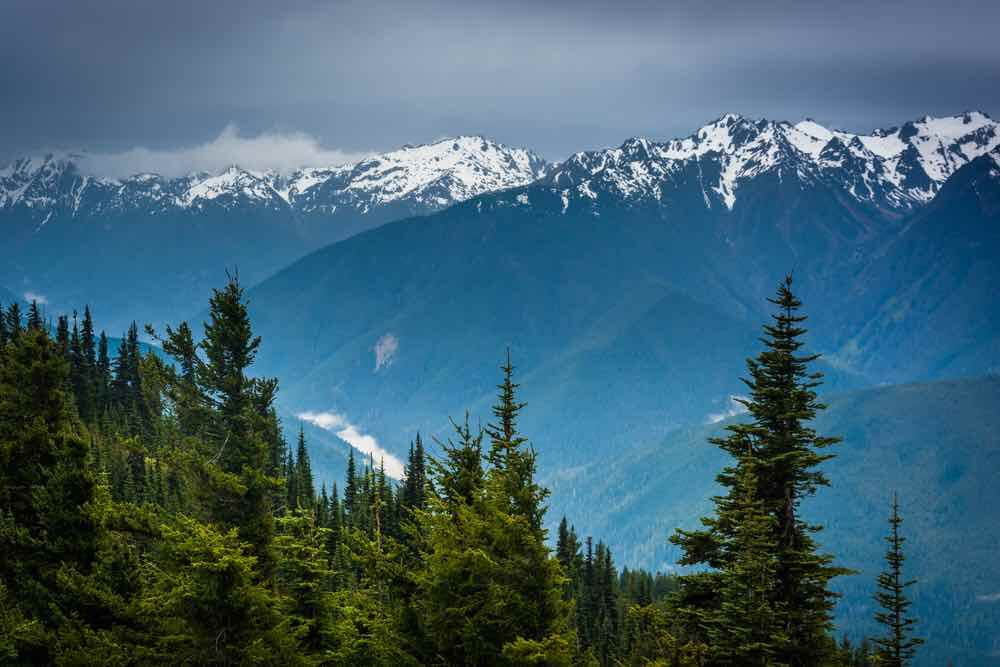 Best Winter Weekend Getaways from Seattle featured by top Seattle travel blogger, Marcie in Mommyland: Image of: View of the snowy Olympic Mountains from Hurricane Ridge, in Olympic National Park, Washington.
