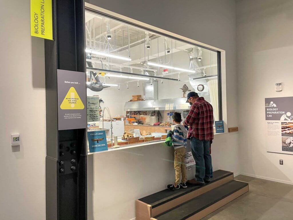 Families can see how the Burke prepares specimens at the Burke Museum. Image of a dad and two boys standing in front of a huge window into a research lab.