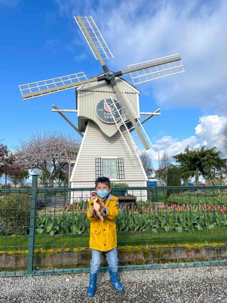 Find out whether or not it's worth visiting Tulip Town at the Skagit Valley Tulip Festival in Washington State. Image of a boy wearing a yellow rain coat and blue rain boots holding a stuffed dinosaur in front of a windmill surrounded by tulips.
