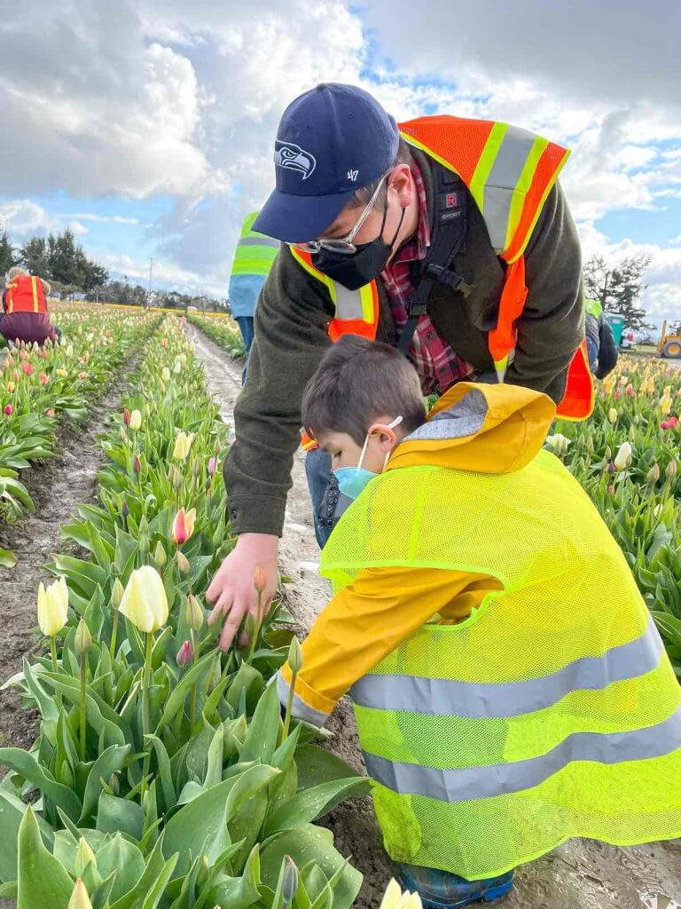 Image of a dad and son wearing safety vests while picking tulips in Skagit Valley, WA.