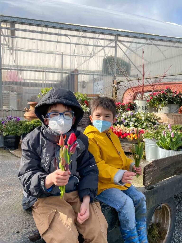 Image of two boys sitting in an old truck holding little tulip bouquets.