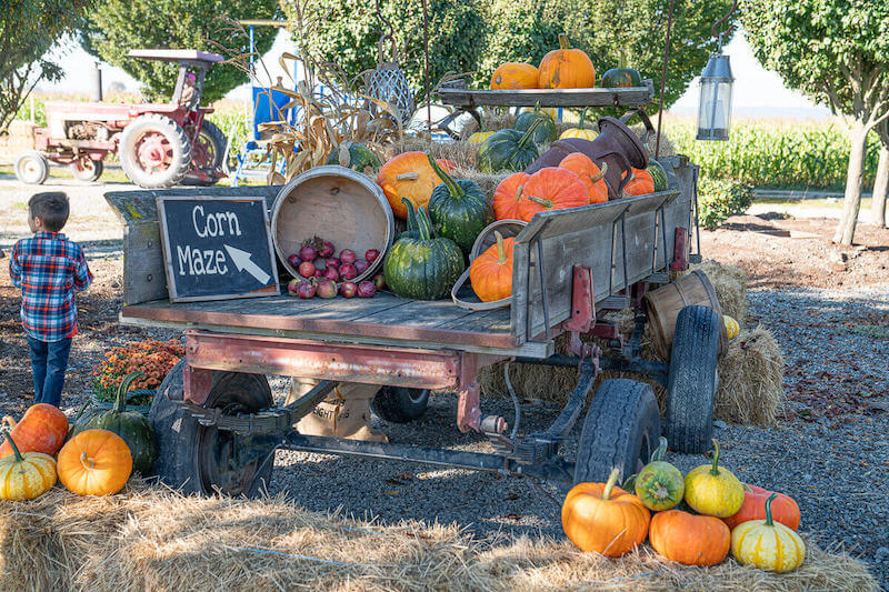 Image of truck with pumpkins and apples in the bed.