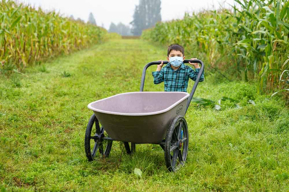 Image of a boy wearing a plaid shirt holding onto a wheelbarrow in the cornfields.