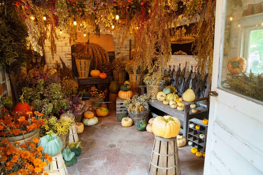 One of the best pumpkin patches in Washington State is Gordon Skagit Farms. Image of colorful pumpkins inside of a barn.