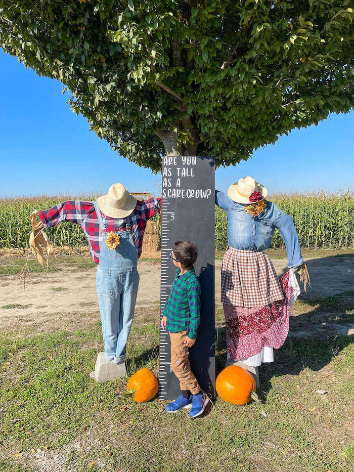 Image of a boy measuring his height against scarecrows at The Harvest at Tulip Town.