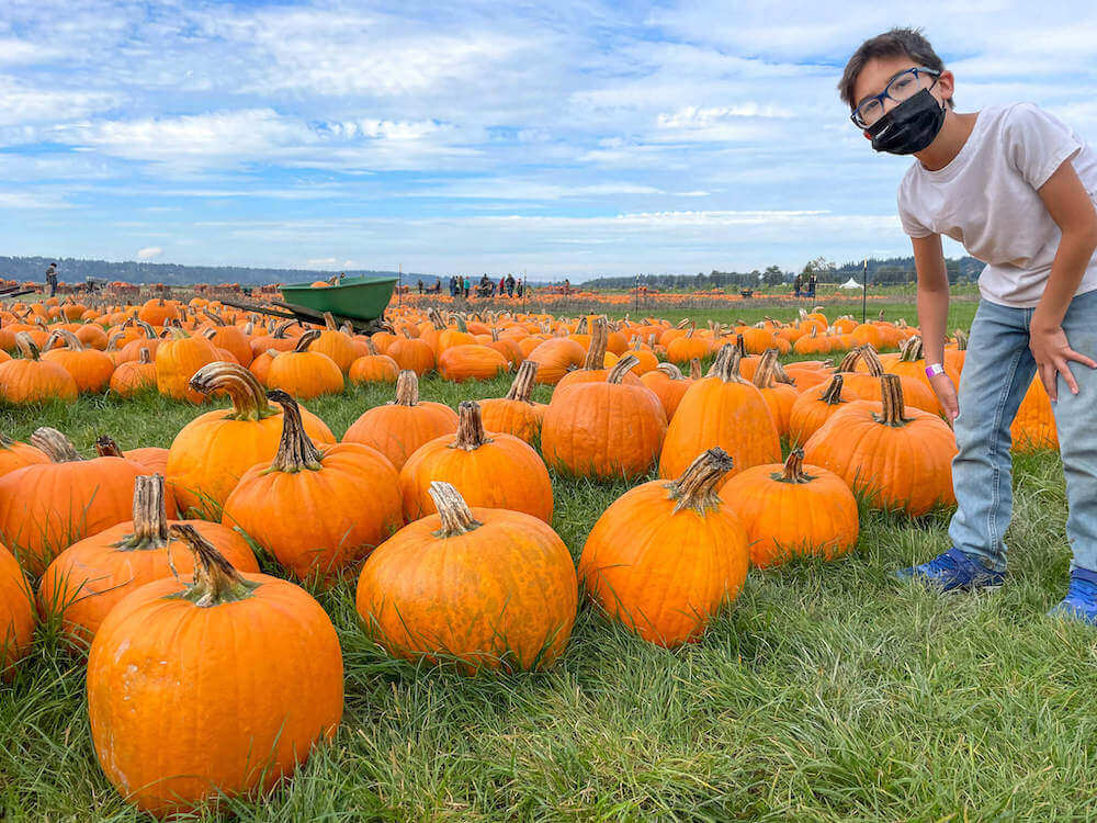 Image of a boy wearing a mask standing next to a bunch of pumpkins lined up on the grass.