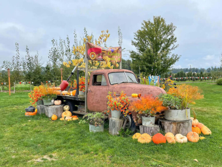 Find out what to do at Stocker Farms pumpkin patch in Washington state by top Seattle blog Marcie in Mommyland. Image of a rusty truck decorated with pumpkins.