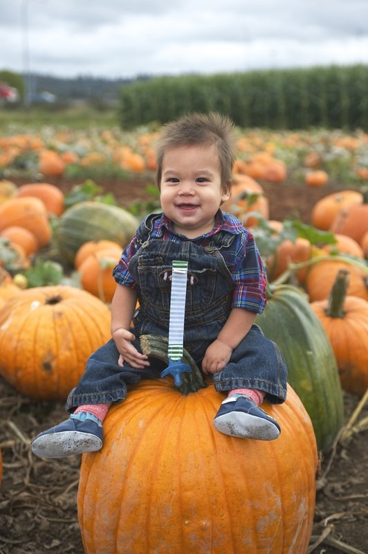 Carpinito Brothers Pumpkin Patch in Kent, WA
